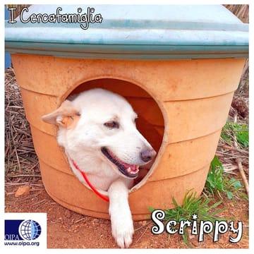 Scrippy