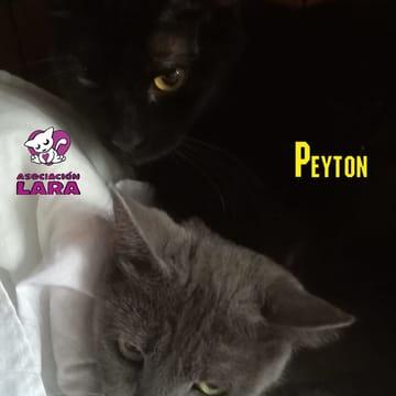 Peyton y brooklyn