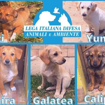 Teti, Yunico, Ianira, Galatea, Calipso