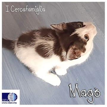 Alice, Balù, Leo, Magò