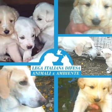 I cuccioli di Cosenza