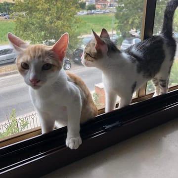LILLO e LILLA