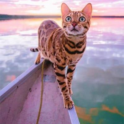 suki gato leonado instagram