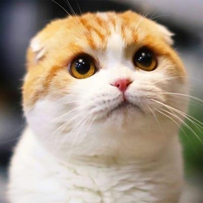 waffles gato instagram