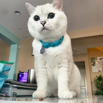 gato blanco instagram