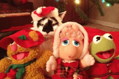 gato disfrazado navidad