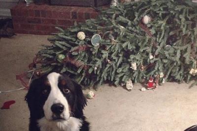 Hund reißt Tannenbaum um