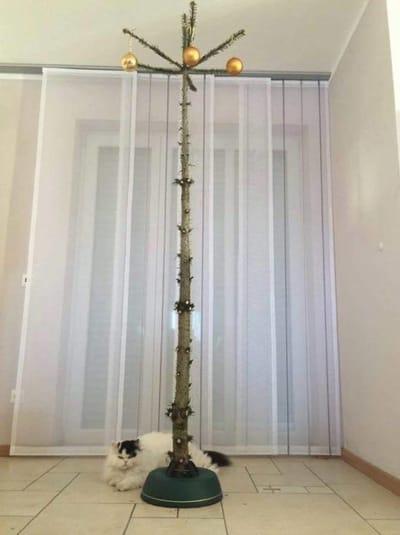 Katze und kahler Baum