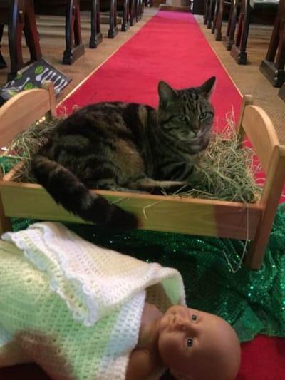 Katze in der Krippe