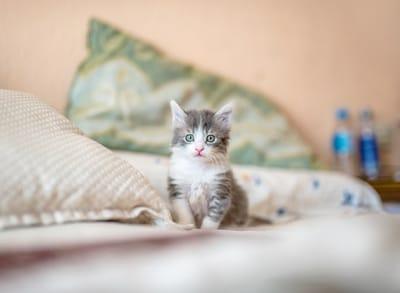 gattino-piccolo-sul-letto