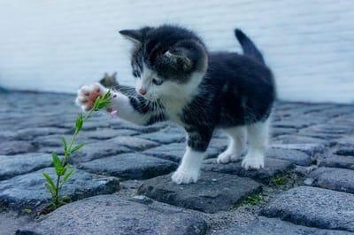 gattino-gioca-con-una-pianta