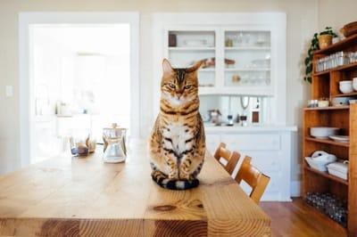 gatto-tigrato-riflessivo