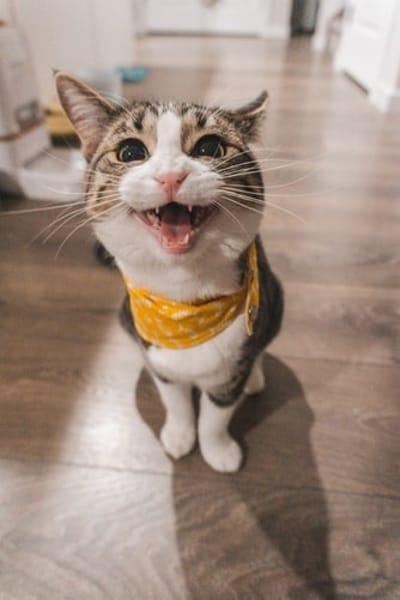 gatto-con-espressione-buffa