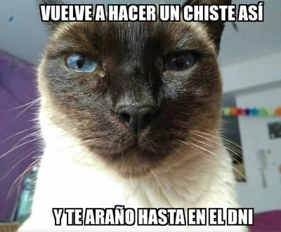 meme gato amenazante