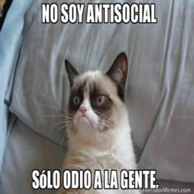 meme gato antisocial