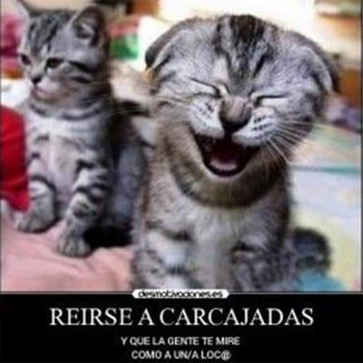 meme gato riendo