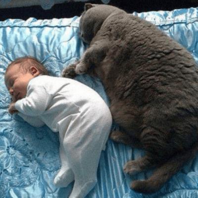 gato gordo durmiendo con bebe