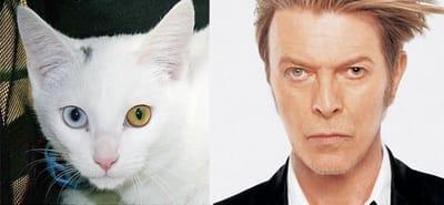 gato david bowie