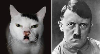 gato hitler