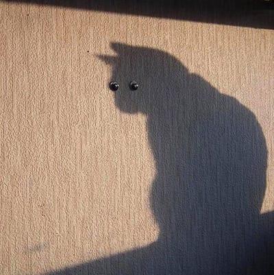 gatos graciosos sombra vigila