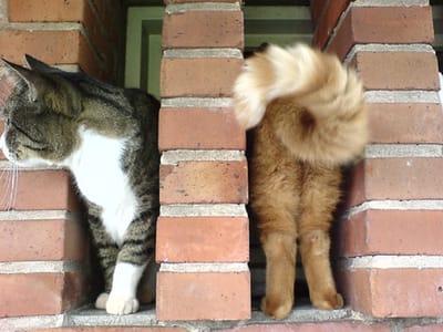 gatos graciosos monica naranjo