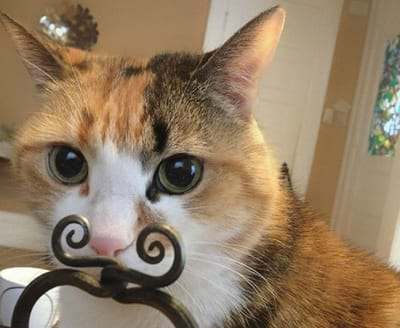 gatos graciosos bigote vintage