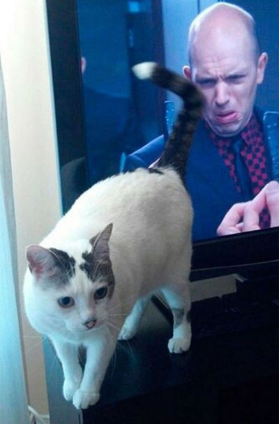gatos graciosos ensena culo television