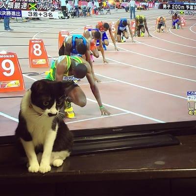 gatos graciosos carrera television