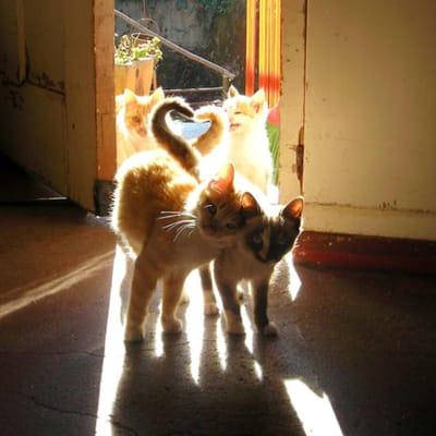 gatos corazón