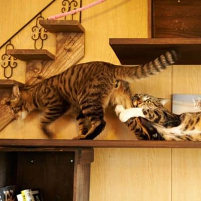 gato dramático