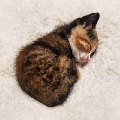 gatito chiquito
