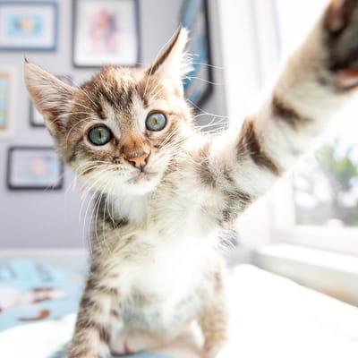 gato toma selfie