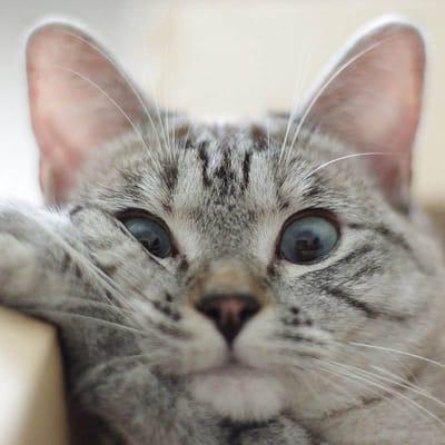 gato desinteresado