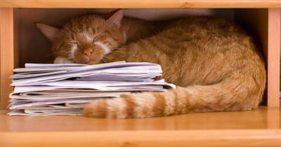 gato durmiendo sitio raro