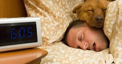 perro durmiendo junto hombre