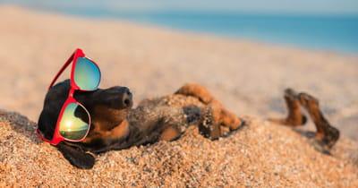 perro durmiendo playa