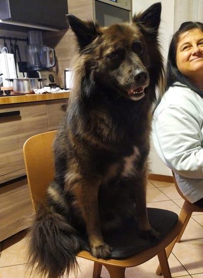 lorenza bertocco con il suo cane
