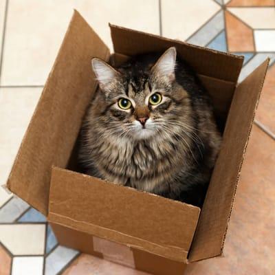 gato en caja de cartón.jpg