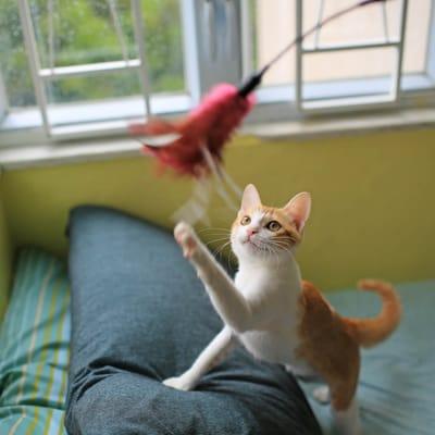 gato jugando.jpg