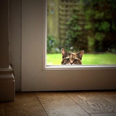 gato quiere entrar.jpg