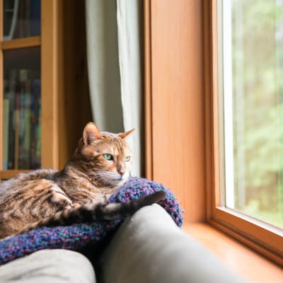 gato viendo por la ventana.jpg