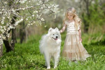 cane-samoiedo-al-parco-con-bambina