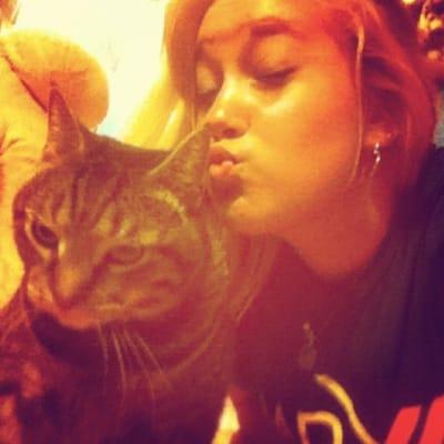 gato rechazando beso