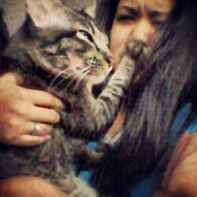 gato pega humana beso