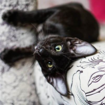 gato negro suerte