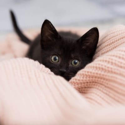 gato negro bebe