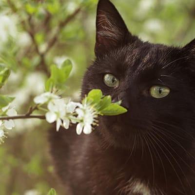 gato negro floresos negros5.jpg