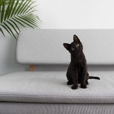 gato negro chiquito