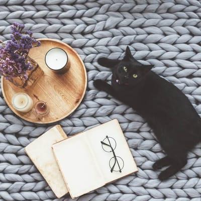 gato negro siesta