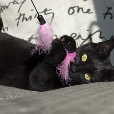 gato negro juego